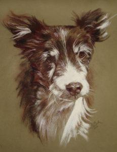 Dog Conte and Pastel Pet Portrait