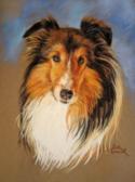 Sheltie Pastel Pet Portrait