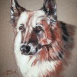Shepherd - Conte Crayon Pet