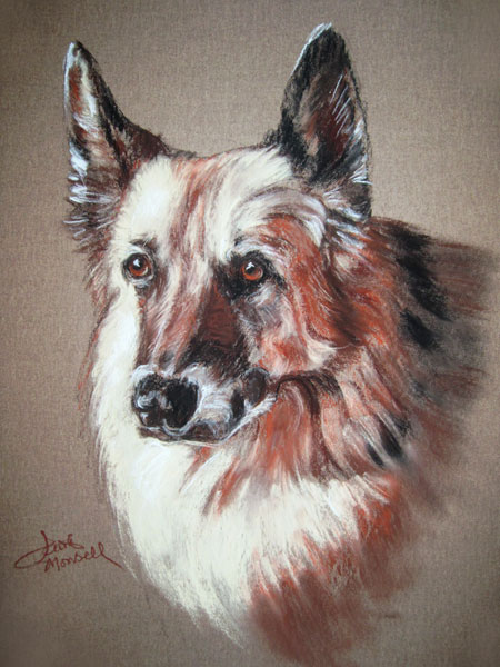 Shepherd Conte Crayon Pet Portrait